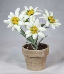 Artificial Edelweiss in Flower Pot